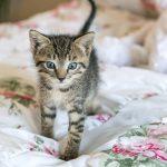 kitty cat dander allergies
