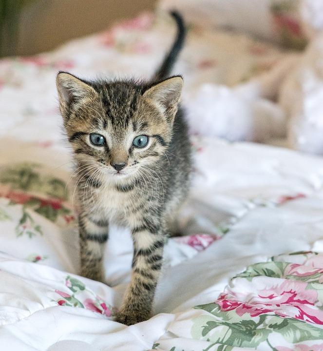 Cat Allergy Helpful Tips For Cat Dander Allergies