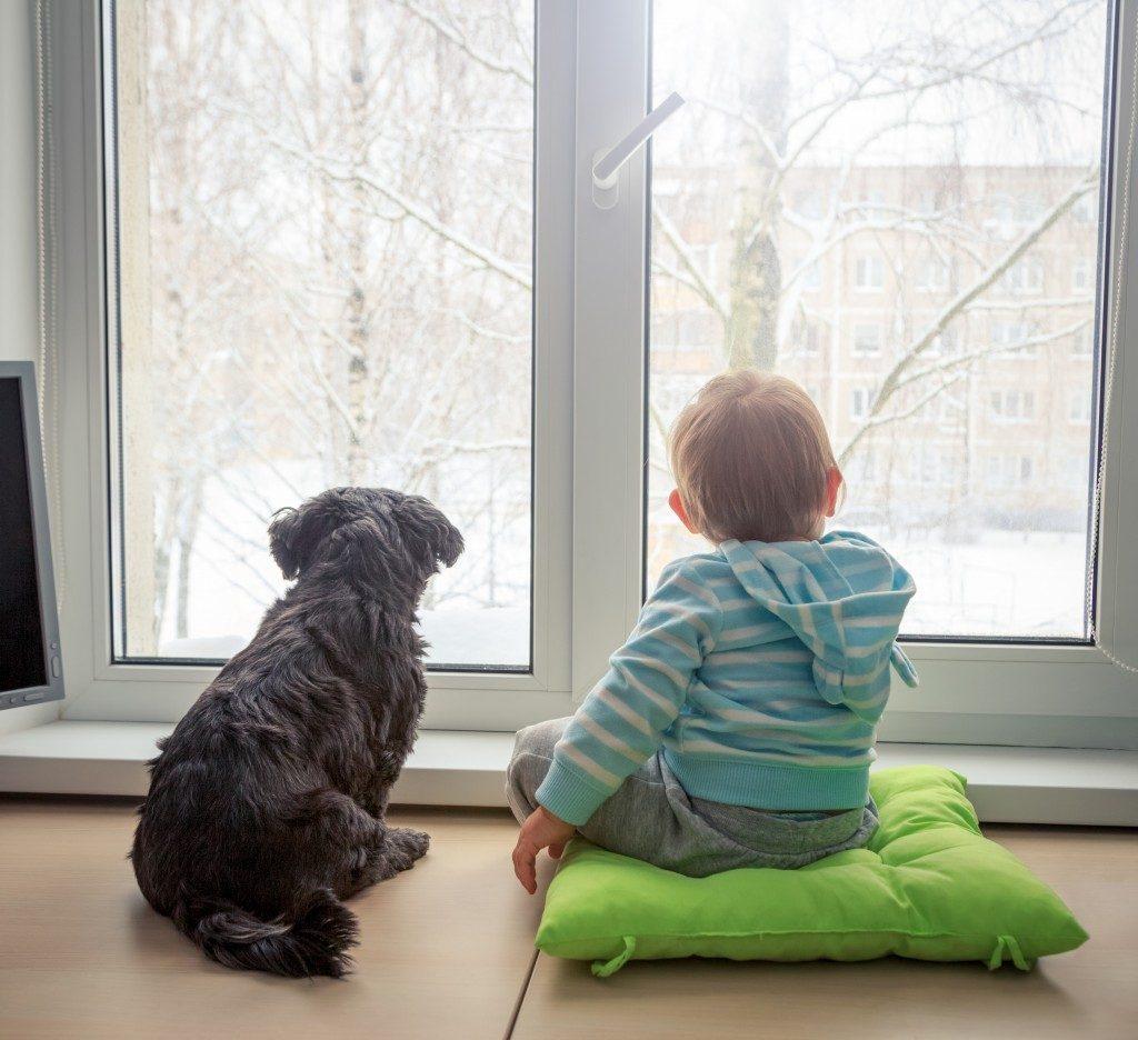 air purifier humidifier boy & dog